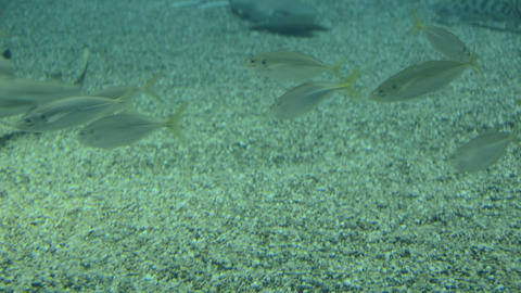 Swimming fish Stock Video Footage