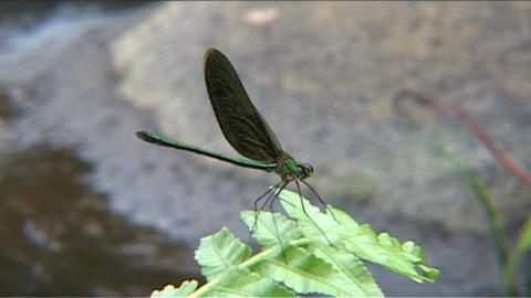 Dragonfly on frond Stock Video Footage
