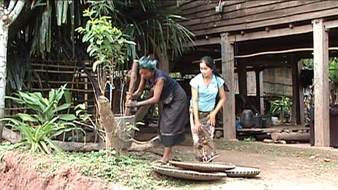 Khmu woman and girl are pounding rice Footage