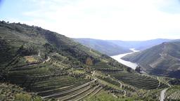 Terraced vineyards in Douro Valley Footage