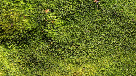 Water on moss Stock Video Footage