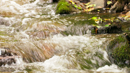 flow of water in the forest creek Stock Video Footage
