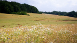 summer farm field Footage