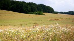 summer farm field Stock Video Footage