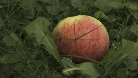 Apples in Garden on a Grass Stock Video Footage