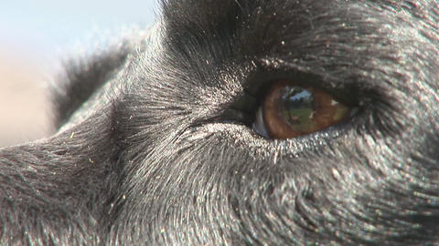 Dog eye close Stock Video Footage