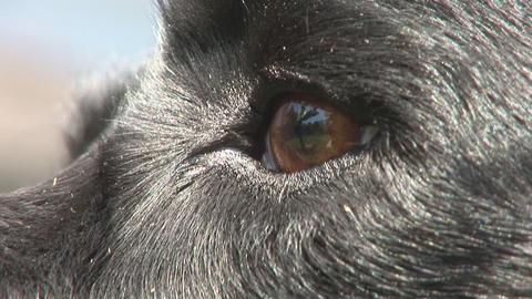 Dog eye close Footage