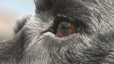 Dog eye close Stock Video Footage