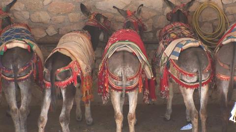 Rears of donkeys Stock Video Footage