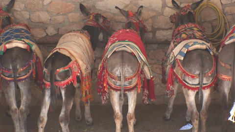 Rears of donkeys Stock Video Footage