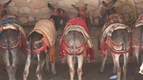 Rears of donkeys Footage