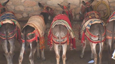 Rears of donkeys Footage