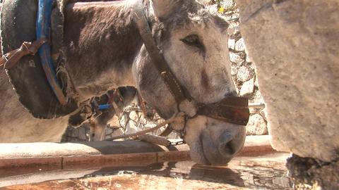 Donkey drinking Stock Video Footage