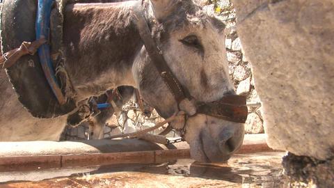 Donkey drinking Footage