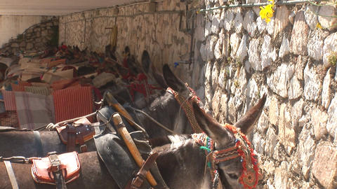 Row of donkeys Stock Video Footage