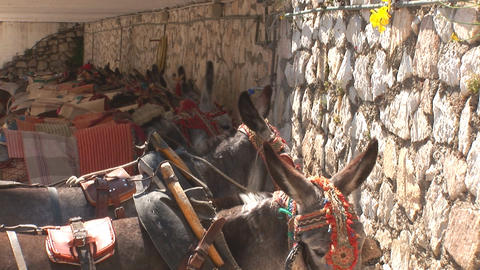 Row of donkeys Footage