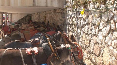Row of donkeys Stock Video Footage