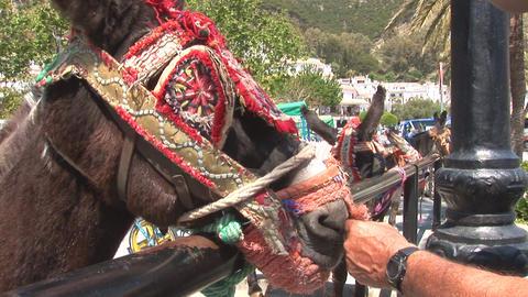 Man pets donkey Footage