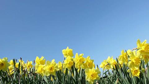 Springtime Flowers Stock Video Footage