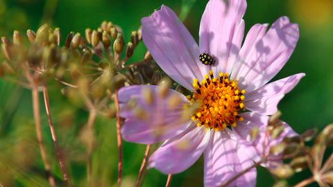 Ladybugs Footage