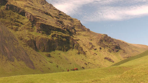 horses in idyllic green landscapa in iceland Stock Video Footage