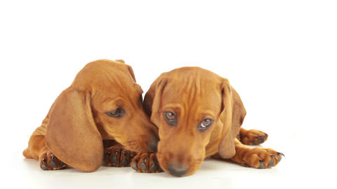 Tenderness of puppy Stock Video Footage
