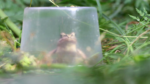 frog under a cap Stock Video Footage