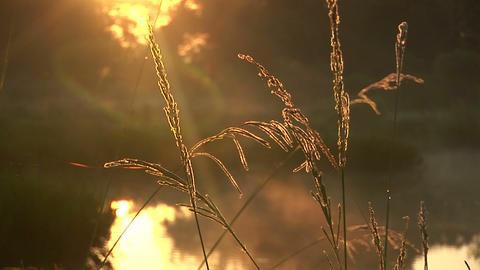 Misty swamp Stock Video Footage
