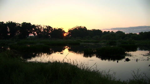 Sunrise over swamp Stock Video Footage