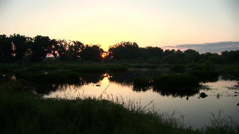 Sunrise over swamp Stock Video Footage
