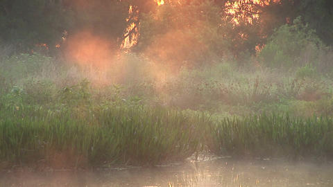 Misty swamp close Stock Video Footage