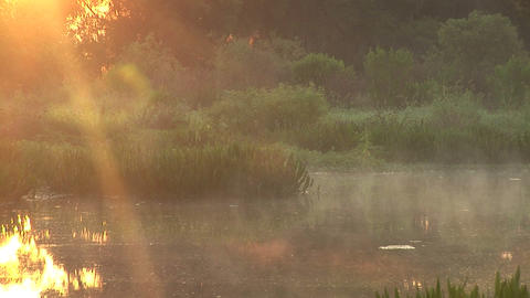 Dawn in swamp Stock Video Footage