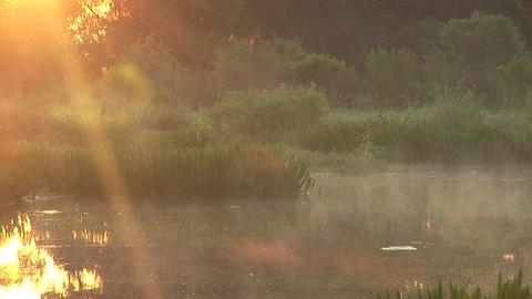 Dawn in swamp Footage