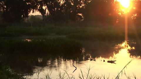 Early morning swamp Stock Video Footage