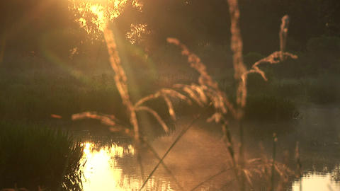 Early morning swamp Footage