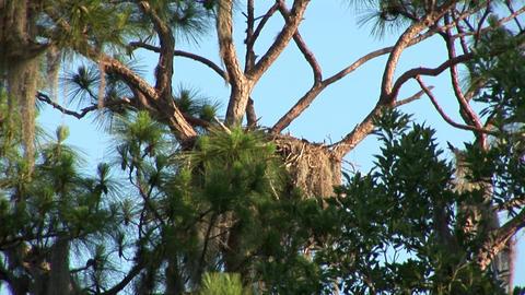 Empty nest Stock Video Footage