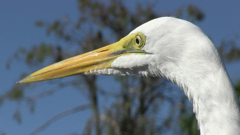 Egret Stock Video Footage
