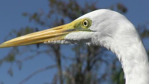Egret Footage