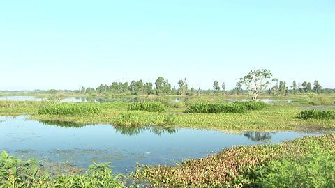 Swamp Florida Stock Video Footage