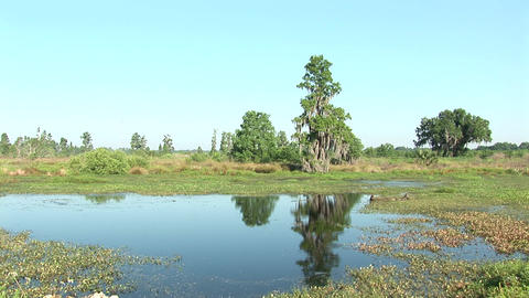 Swamp Florida Stock Video Footage