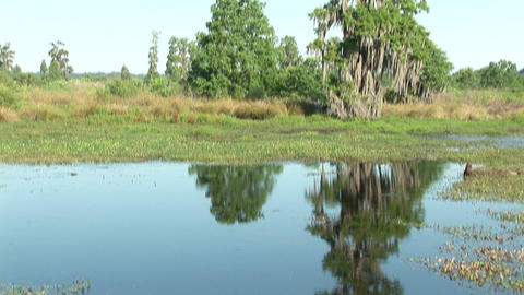 Swamp in Florida Stock Video Footage