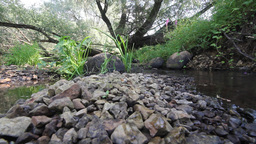small fast mountain river Stock Video Footage