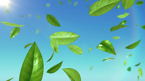 Beautiful Leaves flying in the sky with sun. HD 10 Animation