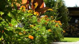 Garden stock footage