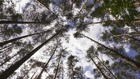 summer forest with tree trunk and cloudy sky. Wide Stock Video Footage