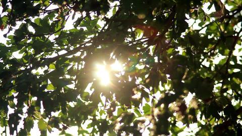 Sun in Trees 1 Stock Video Footage