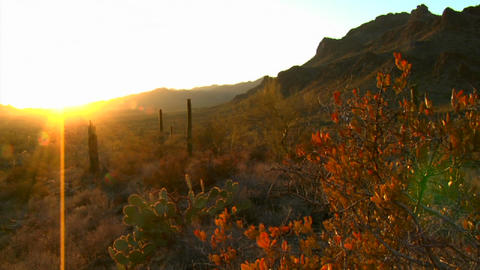 The Mexico, Arizona, Baja or Mojave desert studded Stock Video Footage