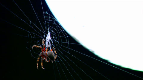 A spider builds a web in time lapse Footage