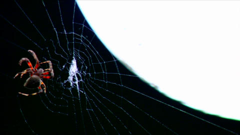A spider builds a web in time lapse Stock Video Footage