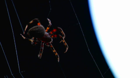 Close up of a spider building a web Footage